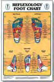 "Reflexology Hand, Foot and Ear Charts 8"" x 10"""